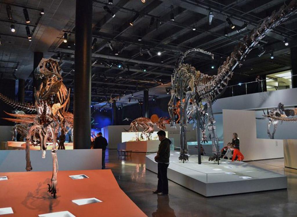 Dinosaur Museum in Houston Texas